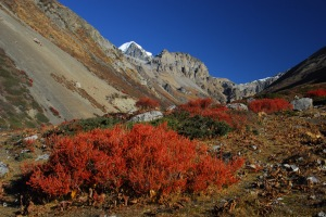 Himalaya_Annapurna_Region
